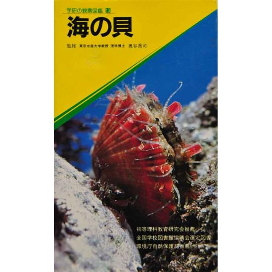 A tenger kagylói